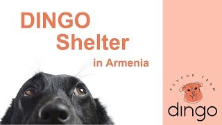 First Very Own DINGO Shelter in Armenia