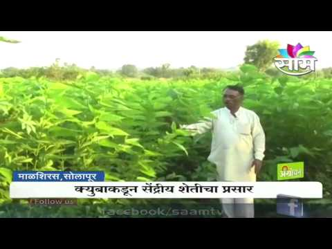 Cuba to give India lessons in organic farming