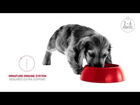 royal-canin-|-health-is:-growing-puppies