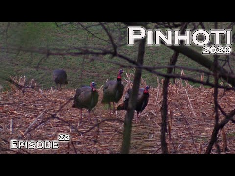 BEST GOBBLING Of 2020 | FIELD FULL Of EASTERN LONGBEARDS | TURKEY HUNTING The MIDWEST -Pinhoti 2020