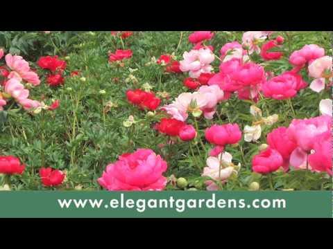 Elegant Gardens Nursery Moorpark