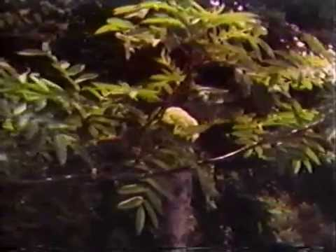 Newfoundland Outdoors May 14, 1985: The Calls of Nature