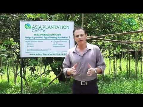Asia Plantation Capital - Agarwood