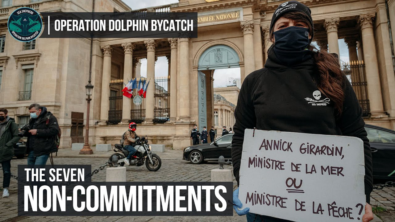 The Seven Non-Commitments of the French Government to Protect Dolphins