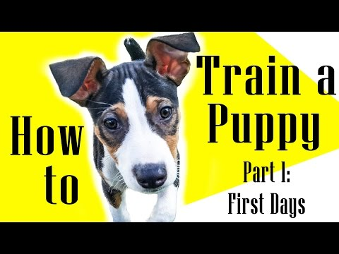 How to Train a Puppy: Part 1 - Leo & Luna