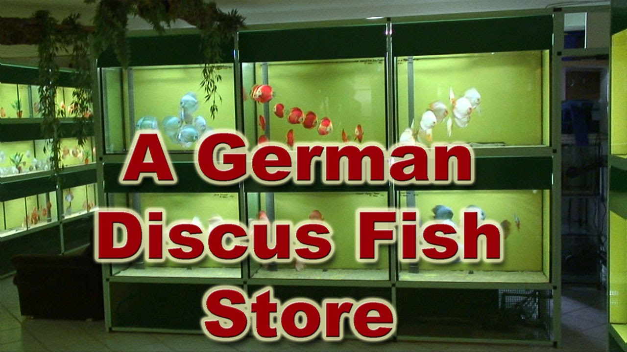 Diskus markt a great discus fish store in germany youtube for Fish store miami