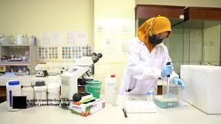 Koga Agar Plate Culture - Departemen Parasitologi FK-KMK UGM