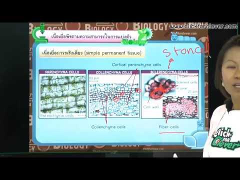 ชีววิทยา ตอน โครงสร้างและหน้าที่ของพืชดอก (Part 1)