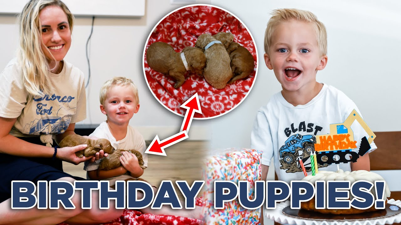 PUPPIES FOR BIRTHDAY! Tommy's 3rd Birthday! 🎂   Ellie and Jared