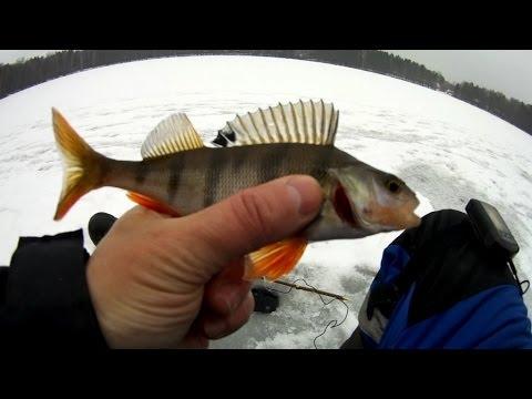 видео рыбалка с эхолотом