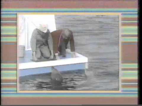 Captain Kangaroo Openings (1987)
