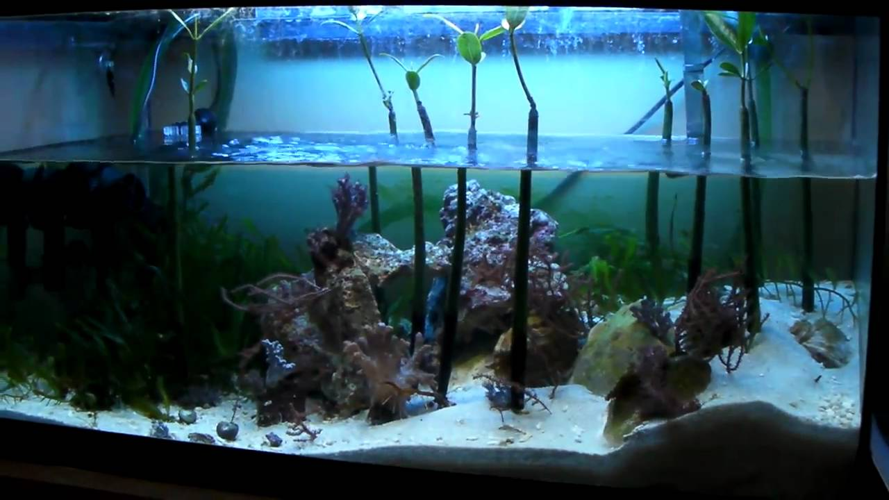 Mangrove Reef Tank Youtube