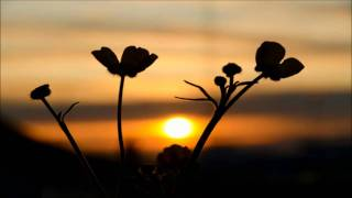 North Sunset - Morning Flower (Sunbeam Remix)