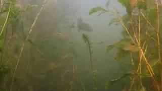 Подводная охота - на озерах 2008 [красивое видео]
