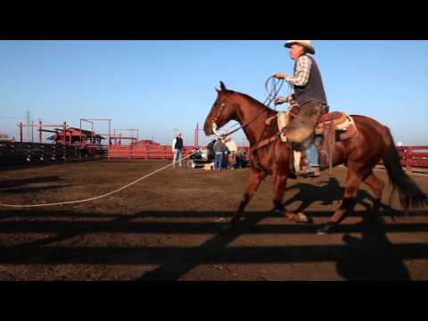 Cattle rustling impacts ranchers