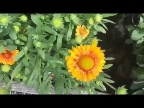 White flower farm in litchfield county connecticut youtube white flower farm in litchfield county connecticut mightylinksfo