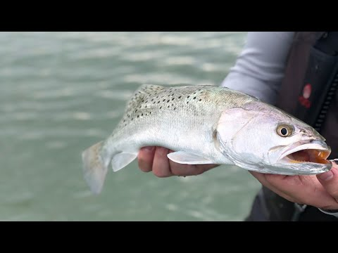 How To Catch Speckled Trout Using Artificial Lures - Flats Fishing Tampa Bay