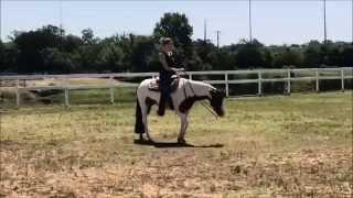 Brunettes Only 2010 APHA All Around Mare For Sale