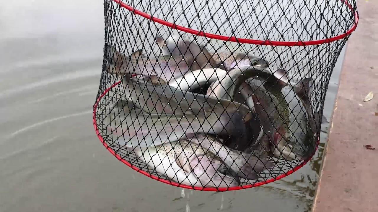 Платная рыбалка белавино форум