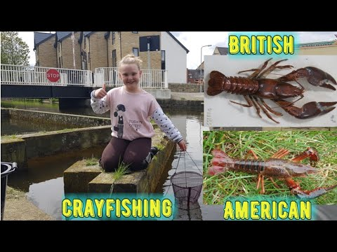 TRYING ARE LUCK AT CRAYFISHING IN THE LEEDS AND LIVERPOOL CANAL,,