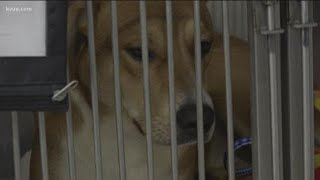 Williamson County Animal Shelter needs more room