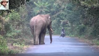 Elephant Chasing a Bike by Jasoprakas.