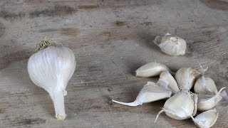Garlic Guide - The Best Garlic Varieties To Grow