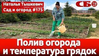 Полив огорода и температура грядок