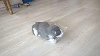 Прикол с котом -   кошак в пакете! Смешные коты