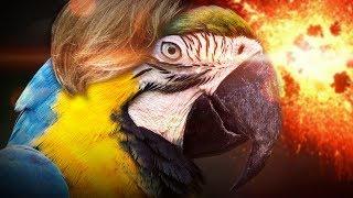 Jam Jest Papugen! || Ultimate Chicken Horse