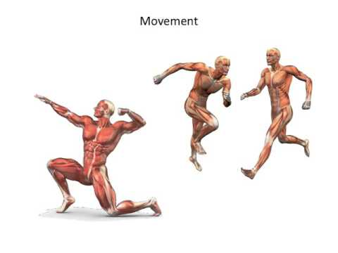 muscular system- types and functions - youtube, Human Body