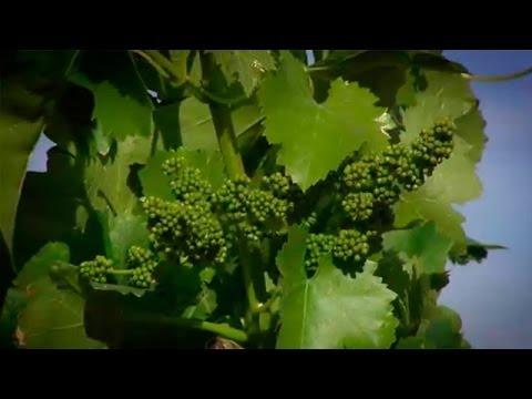 Villa del Prado, los mayores productores de vino de Madrid