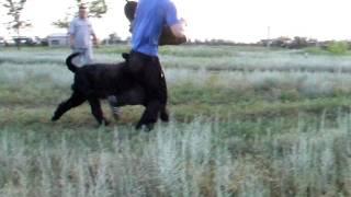 Уральск обучение Дюка первые занятия на жесткий рукав