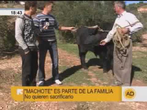 """Un toro de lidia como mascota, en """"Andalucía Directo"""""""