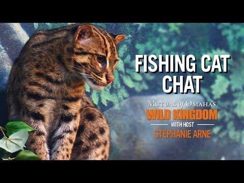 Wild Kingdom | On Location | Fishing Cat