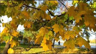 #Осень-пора любви Красивое осеннее слайд-шоу