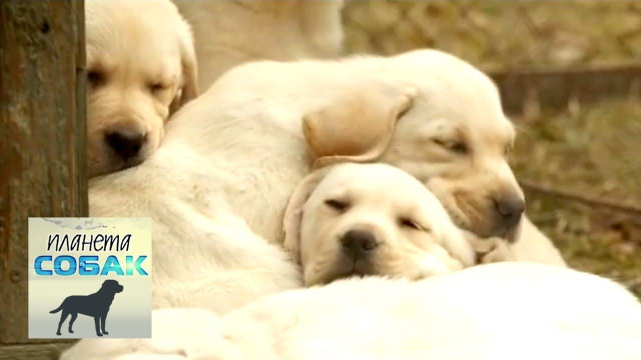 Рейтинг самых отважных собак. Планета собак