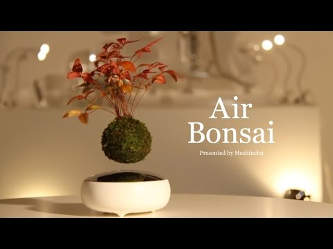 [Official] Hoshinchu | Air Bonsai -Promotional Video-