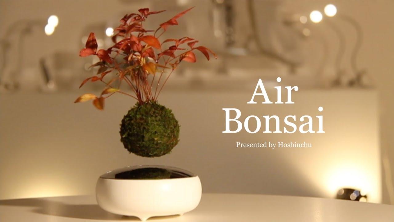 Air Bonsai Hoshinchu
