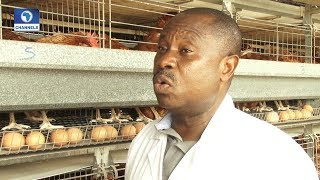 Community Report On Nigerian Poultry Farmers Pt 1