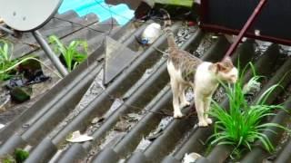 tom cat urine spray and marking territory