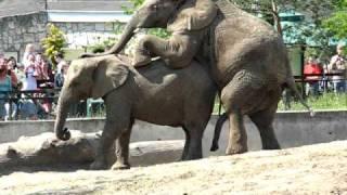 Słonie w zoo 2