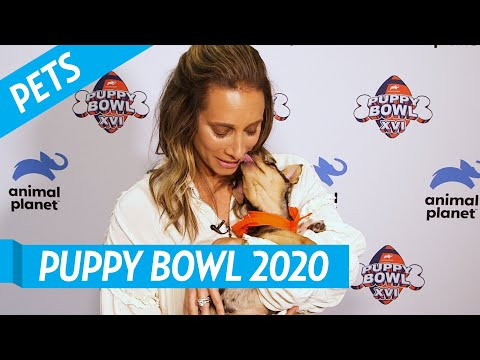 Puppy Bowl 2020