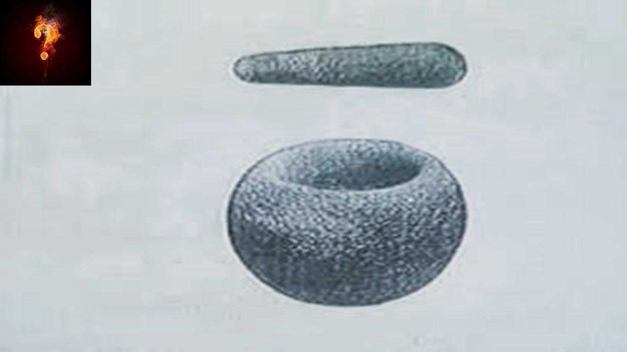 33 Million Year Old Mortar & Pestle?