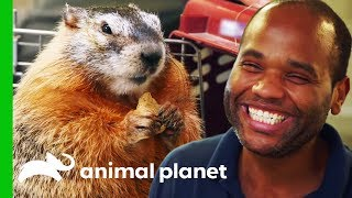 Mott Mott The Marmot Has A Special Bond With Her Best Buddy! | The Zoo
