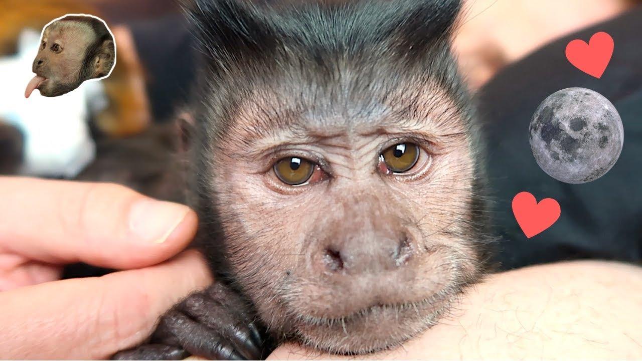 capuchin-monkey-babies-say-goodnight