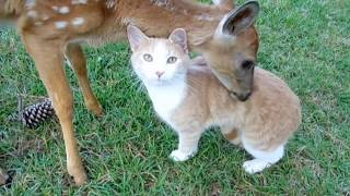 Baby DEER & CAT Adopt each other By The Lighthouse Lady