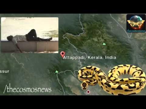 Anaconda Engole Homem Bébado na Índia (CANAL 82- ANGOLA)