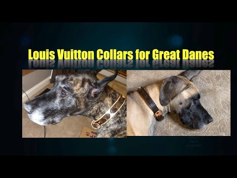 louis-vuitton-collars-for-my-great-danes-from-a-subscriber