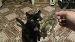 Кошка ест горошек как будто там мясо